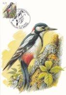 Buzin Carte Maximum Pic Epeiche 31.03.2003 - 1985-.. Birds (Buzin)