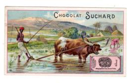Chromo Chocolat Suchard, 130 / 10, Agruculture En Asie, Riz (?) - Suchard