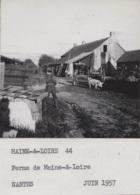 Agriculture - Photographie - Environs De Chemillé 49 - Ferme Champ De Menthe Poivrée - Lot De 4 Photos - Landbouw