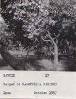 Agriculture - Photographie - Vimines 73 - Ferme Verger Mr Buffle - Arboriculture Pommiers - Lot De 5 Photos - Landbouw