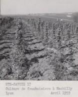 Agriculture - Photographie - Machilly 74 -  Lot De 2 Photos - Landbouw