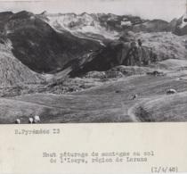 Agriculture - Photographie - Col De L'Iseye Région De Laruns 64 -  Lot De 2 Photos - Landbouw