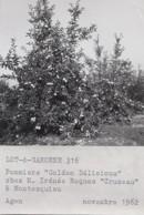 Agriculture - Photographie - Montesquieu 82 - Arboriculture Pommiers - Exploitation M. Irénée Roques Cruzeau - 4 Photos - Landbouw
