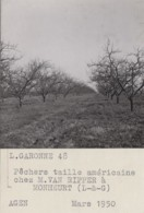 Agriculture - Photographie - Monheurt 82 - Arboriculture Pêchers - Verger Exploitation M. Van Ripper - 2 Photos - Landbouw
