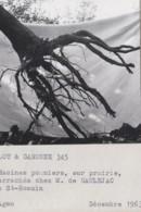Agriculture - Photographie - Saint-Romain 82 - Arboriculture Pommiers - Exploitation M. De Gauléjac- 1 Photo - Landbouw