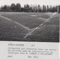 Agriculture - Photographie - Saint-Laurent 82 - Champ Maïs - Exploitation M. Lozano - 3 Photos - Landbouw