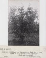 Agriculture - Photographie - Sainte-Livrade 82 - Verger Arbres Coing Pomme - Exploitation M. Guillaume - 2 Photos - Landbouw