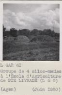 Agriculture - Photographie - Sainte-Livrade 82 - - Exploitation Silo Meule - Arbres Pruniers - 3 Photos - Cultures