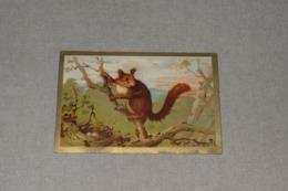 Tisane Des Pères Célestins écureuil Squirrel - Tea & Coffee Manufacturers