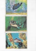 Biscottes Reinettes - Océanrama Poissons Des Tropiques - 3 Images Dont Deux Avec Formes à Détacher - Other