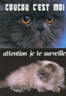 Animaux - 4 Cartes Chat - Gatti