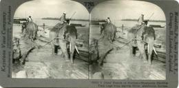 Burma Myanmar MAULMAIN Elephant Hauling Teak Logs From Salwin River 12553 T265 18560 - Fotos Estereoscópicas