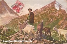 Suisse - NL - Chevrier Dans Les Alpes  Ziege Chevre Goat - Schweiz