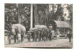 Ceylon - Sending A Boiler To A Tea Factory, Pulled By Elephants - Old Postcard - Sri Lanka (Ceylon)