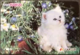 Prepaidcard Japan - Katzen,cats (10) - Katzen