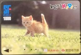 Prepaidcard Japan - Katzen,cats (9) - Katzen