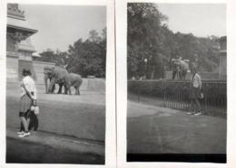 2 Photos Originales Portrait De Femme Au Zoo De Berlin & Eléphants En Duo - éléphant - Anonyme Personen