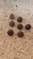 Sept Boutons Anciens En Laiton - Buttons