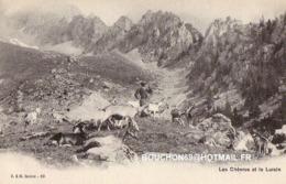 Suisse - Valais - Les Chèvres Et Le Luisin Ziege Chevre Goat - VS Wallis