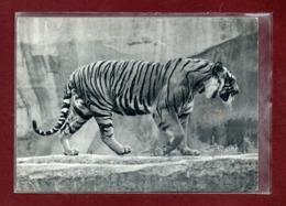 75-CPSM PARIS - PARC ZOOLOGIQUE - LE TIGRE - Tigers