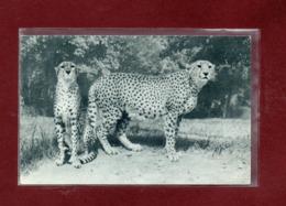75-CPSM PARIS - PARC ZOOLOGIQUE - LES GUEPARDS - Animals