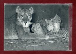 75-CPSM PARIS - PARC ZOOLOGIQUE - LIONNE ET SES PETITS - Lions