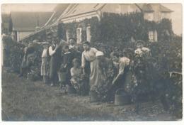 JOUE LES TOURS - Carte Photo - Vendanges Au Grand Fourneau, 1915 - Frankreich