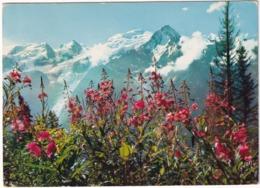 Massif  Du Mont-Blanc - La Floraison Des Phlox Sauvages Face Au Mont Blanc - (Haute-Savoie) - Chamonix-Mont-Blanc