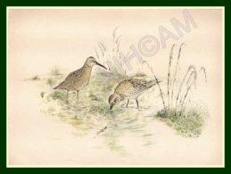"""Aquarelle Rehaussée """" Courlis """" Signée 28,8 X 22 Cm TB (Scan Signature) Oiseau D'eau Chasse Gibier Bird - Estampes & Gravures"""