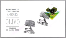 OLIVO - OLIVE - OLIVEBAUM. SPD/FDC Sevilla, Andaucia, 2001 - Árboles