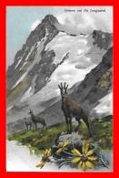 CPA Illustrateur E. PLATZ.  Gemsen Am Piz Languard. Isard Dans Les Alpes Suisse...J769 - GR Grisons