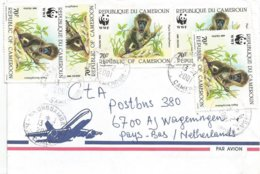 Cameroon Cameroun 2001 Nkongsamba Drill Mandrillus Leucophaeus WWF Cover - W.W.F.
