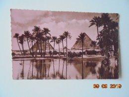 Cairo The Pyramids. Tropical Photo Stores Dated 1952 - El Cairo