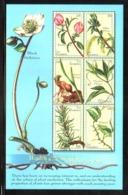 Gambia, 2001. [gam0151] Medicinal Plants (s\s) - Medicinal Plants