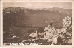 Suisse - Vaud - Suchet - Au Sommet (alt 1595m) Chevre Goat - VD Vaud