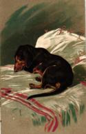 Dackel, Auf Einem Bett Liegend, Prägekarte, 1906 - Hunde