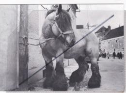 """Toucy (89) Série """"De Pégase En Licorne"""",Photo Jacques Faujour. N° F 47,Tirage Limité(superbe Cheval De Trait) - Toucy"""