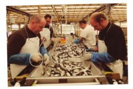 CP  Transformation Des Produits De La Mer, Poisson, Boulogne Sur Mer, Nord-Pas De Calais, Hauts De France - Pêche