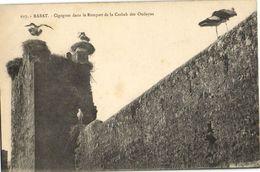 CPA MAROC RABAT Cigognes Dans Le Rempart De La Casbah Des Oudayas (31420) - Rabat