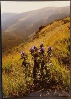 Ak Tschechien - Blumen Aus Dem Riesengebirge - Schwalbenwurz - Enzian - Blumen