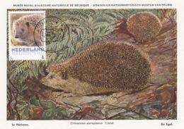 D38167 CARTE MAXIMUM CARD 2013 NETHERLANDS - LE HÉRISSON IGEL HEDGEHOG EGEL CP MUSEUM ORIGINAL - Briefmarken