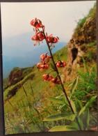 Ak Tschechien - Blumen Aus Dem Riesengebirge - Türkenbund - Lilie - Blumen