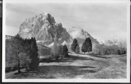 DOLOMITI - IL SASSOLUNGO - FORMATO PICCOLO - EDIZ. AMONN - NUOVA ORIGINALE D'EPOCA - Alpinismo