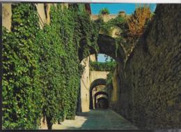 TOSCANA - CASTIGLIONE DELLA PESCAIA (GR) - VIA DEL RECINTO - VIAGGIATA 1983 - Italia