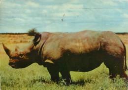 KENYA - Rhinoceros - PUBLICITE AMORA - Kenya
