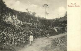 Straits Settlements, Malay Malaysia, Tobacco Fields (1899) Kaulfuss 23 Penang - Malaysia