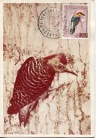 47137  Venezuela, Maximum 1968 Oiseau, Bird, Vogel, Melanerpes Rubricapillus,red Crowned Woodpecker,rotkappenspecht - Other