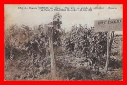CPA (47) PRAYSSAS.  Domaine De Forêt.  Effet Des Engrais Véritas Sur Vigne. 30 Juin 1934...J793 - Vignes