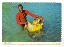 SCHILDKRÖTE / Turtle / Tortue / Zeeschildpad, Hawksbill Turtle, Bahamas 1979 - Turtles