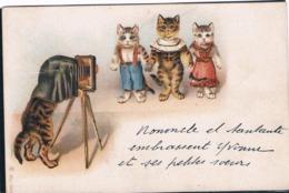 Chats Humanisé-dressed Cats -katzen - Poezen Fotograaf - Katten
